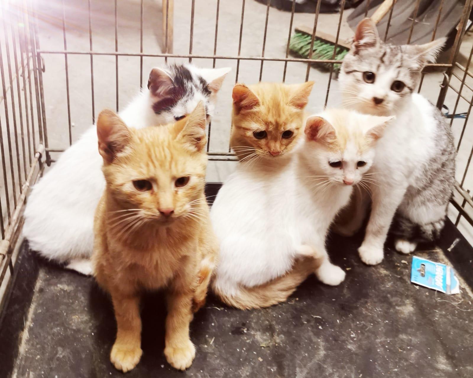 Szukamy domu dla kotów